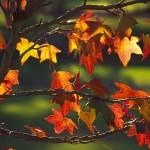 autunno_1